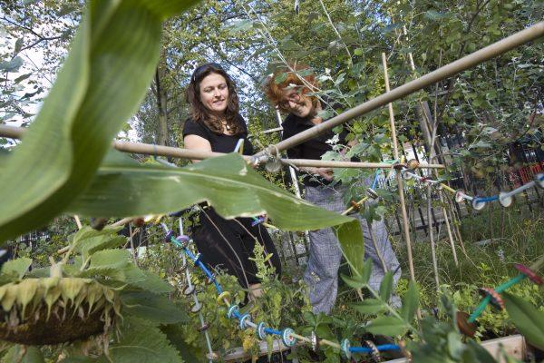 Het sociale (on)gemak van een binnentuin
